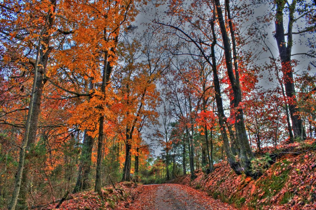 Country Road HDR