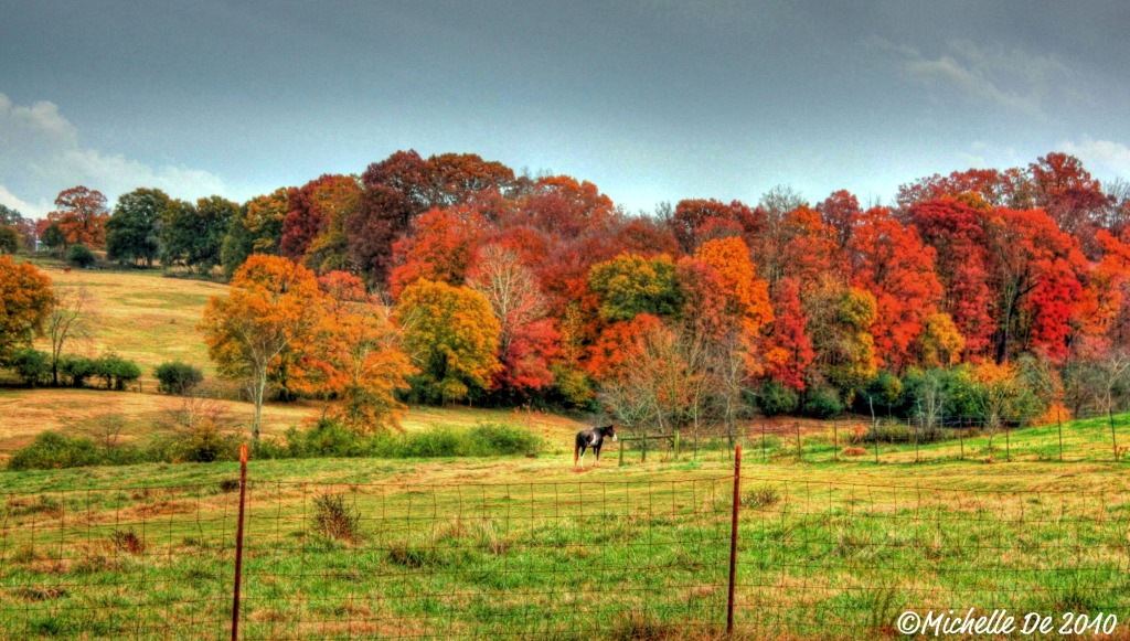 Horse & Fall Colors Franklin County 2010